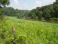Take a stroll thru the flowers to the river....