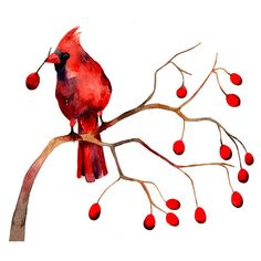 Cardinal Winter Berries Christmas Watercolor Illustration Print Feather Nature Branch Woodland (25 CAD) found on Polyvore