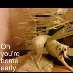 That's why my blinds are crinkled when I get home.