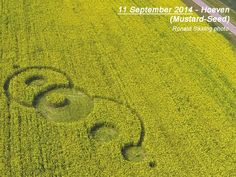 "LATEST CROP CIRCLE! Crop Circle at Hoeven (4), Holland. Reported 11th September 2014.  Mustard seed field.  ""With faith as tiny as a mustard seed..."""