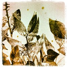 Tiziana Solito - A piece of my Eden #illustration #collage #monotype