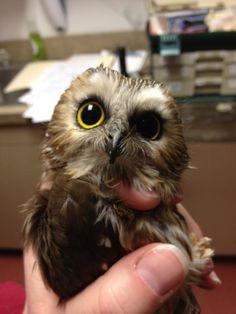 OMG. So cute!