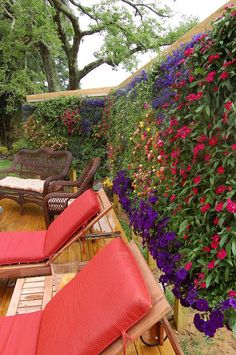 my home deck featuring my beaqutiful green wall installed for privacy, decks, outdoor living