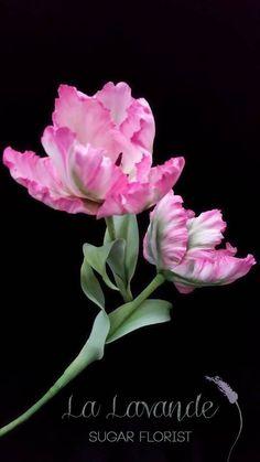 Parrot Tulip Tutorial (Gumpaste Flower) - CakesDecor
