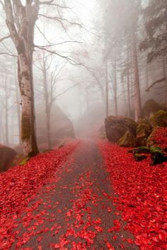Red Mist - The Enchanted Wood