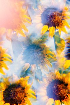 In a garden at summertime, sunflowers are shot with a prism filter for unusual light and/or kaleidoscopic effects. Photography Filters, Still Photography, Image Photography, Nature Photography, Distortion Photography, Music Cover Photos, Kaleidoscope Images, Pastel Grunge, Psychedelic Art