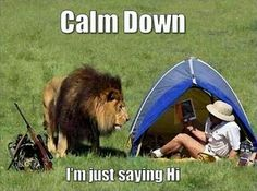 Calm Down, I'm Just Saying Hi funny lol funny quotes humor funny pictures funny photos funny images hilarious pictures Funny Animal Pictures, Funny Photos, Funny Animals, Funny Images, Animal Pics, Lion Pictures, Funniest Pictures, Hilarious Pictures, Pictures Images