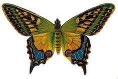 Resultado de imagen para butterfly