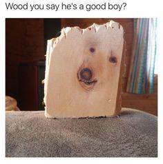 Who's a Good Tree | Mega Memes LOL!