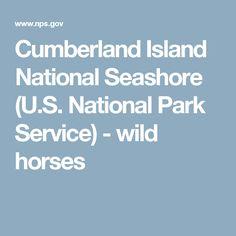 Cumberland Island National Seashore (U.S. National Park Service) - wild horses