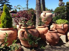 Large terracotta pots with topiary google search garden dreams large terracotta pots the polished pebble workwithnaturefo