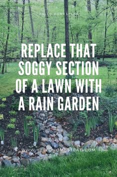 Replace that soggy section of lawn with a rain garden - Rain gardens are beds of plants that are located where rain naturally gathers or where rain is dive - Backyard Drainage, Landscape Drainage, No Grass Backyard, Maryland, Rain Garden Design, Drainage Solutions, Drainage Ideas, Front Yard Landscaping, Dry Riverbed Landscaping