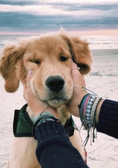 This lovely puppy golden retriever will make you happy. Dogs are awesome companions. Cute Baby Animals, Animals And Pets, Funny Animals, Animals Images, Cute Puppies, Dogs And Puppies, Doggies, Doggie Beds, Yorkie Puppies