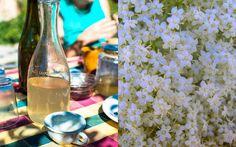 La Tavola Marche: Elderflowers, Pretty Enough to Drink - Sciroppo di fiori di sambuco