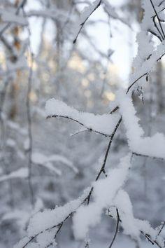 Koivun ritvaoksia tammikuisena pakkaspäivänä. February, Snow, Grey, Winter, Outdoor, Gray, Winter Time, Outdoors, Outdoor Games
