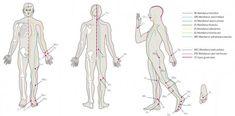 Punctul care poate trata 100 de boli! Ce se intampla daca il masezi? Map, Health, Medicine, Plant, Health Care, Location Map, Maps, Salud