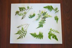 Create a wall art design to merge with nature!  Fern Canvas Wall Art to Bring Some Nature Inside. If you're looking to decorate your home our canvas prints offer an excellent solution to liven up any space.