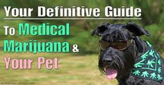 Dr. Silver's new book is for dog and cat owners who want to understand more about the benefits and risks of cannabis as well as the legal issues surrounding it.