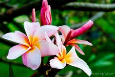 flower images - AOL Image Search Results