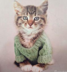 Tiny kitten in a tiny jumper!!