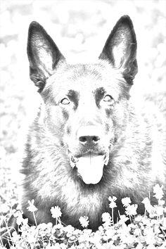 Dynatos- Styxx's dog in Greece. Sherrilyn Kenyon Books, Dark Hunter, Another World, Hunters, Beautiful World, Minions, The Darkest, Moose Art, Sketches
