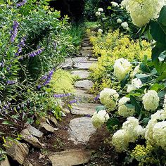 Beautiful Green and White Plant Combinations Silver Plant, White Plants, Pathways, Shrubs, White Flowers, Perennials, Wedding Ideas, Leaves, Landscape