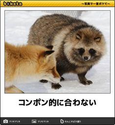 画像 Animals And Pets, Funny Animals, Cute Animals, Funny Cute, Hilarious, Witty Remarks, Funny Photos, Cool Words, Funny Memes
