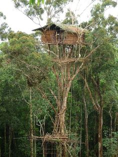 """"""" Korowai Tribe's traditional house, West Papua, Indonesia. The tree house of the tribe can stand up to 60 meters above the ground. This means to avoid wild animal or as a good spot to shot on them or. Beautiful Tree Houses, Cool Tree Houses, House Trees, Papua Nova Guiné, West Papua, Tree House Designs, Tree Tops, In The Tree, Papua New Guinea"""