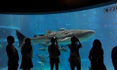 Japão tem 2 entre os 20 melhores aquários do mundo – Mundo-Nipo