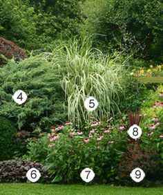 For a Border:  4. Juniper - Zones 2-9    5. Variegated miscanthus - Zones 4-9  6. 'Plum Pudding' heuchera    Zones 4-9  7. Purple coneflower - Zones 3-9    8. Cordyline - Zones 10-11    9. 'Crimson Pygmy' Japanese barberry - Zones 5-8