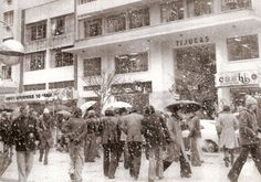 Curitiba enfeitada pela neve de 1975 - Galeria Tijucas