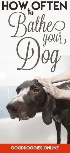 Learn about when you should give Dog a bath. #dogcare #dogs #dogmom