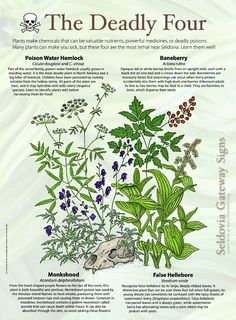 Get The Perfect Herb Garden With These Simple Tips Herb gardening is an excellent way to make sure that your family is getting the best produce that they can. You will not be using any pesticides, and since you are growing everything Deadly Plants, Poisonous Plants, Magic Herbs, Herbal Magic, Survival Life Hacks, Survival Skills, Survival Tips, Healing Herbs, Medicinal Plants