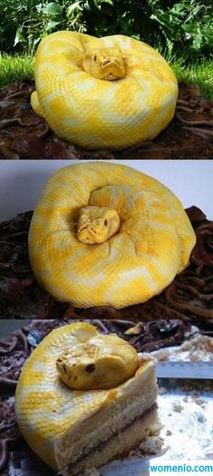 Funny pictures about Just a snake? Oh, and cool pics about Just a snake? Also, Just a snake? Crazy Cakes, Fancy Cakes, Pretty Cakes, Beautiful Cakes, Amazing Cakes, It's Amazing, Cake Cookies, Cupcake Cakes, Snake Cakes