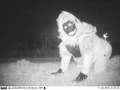 Cops' wildlife cameras catch pranksters dressed as animals     - CNET  Enlarge Image  Behold one of the Gardner beasts.  Photo by                                            Gardner Police Department                                           Gardner Kansas in the US is turning out to be quite the hot spot for strange wildlife sightings.   The Gardner Police Department responding to concerns about a possible mountain lion haunting a park set up two motion-triggered trail cameras to keep an eye…