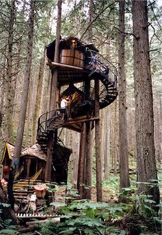 British Columbia multi-level treehouse