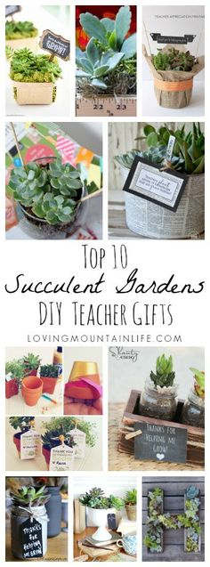 Top 10 DIY Succulent Gardens for Teacher Gifts from Loving Mountain Life