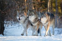 3 brothers on the prowl !!