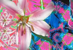 Probably the most technically sound digital image manipulation in the floral series.