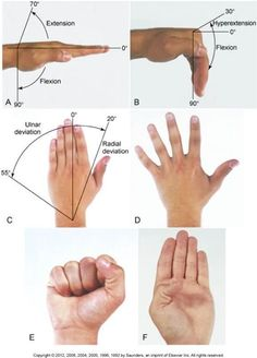The rotation of the finger