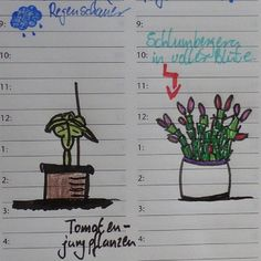 Moin ihr lieben hab gedacht ich versuch mich mal am Zeichnen zum runterkommen. Ich bin mir noch nicht ganz sicher wie ich das Ergebnis find :-D dachte das lockert das Gartenjournal etwas auf :) #sketch #zeichnen #pflanzen #schlumbergera #tomatenpflanze #filofax #filofaxing #filofaxdeutschland #filofaxgermany #filofaxerei #filoaddict #filolove #filo #planneraddict #plannerlove #plannernerd #plannerlover #plannergirl #plannerholic #plannercommunity #planner #gartenjournal by vischy612