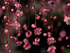 Especial de Flores