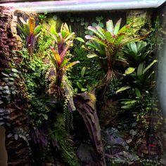 Varadero build - Page 3 - Dendroboard Gecko Vivarium, Gecko Terrarium, Orchid Terrarium, Reptile Terrarium, Glass Terrarium, Glass Aquarium, Planted Aquarium, Varadero, Reptile Cage