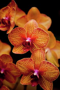 """Deep Cut Orchid Society 15th Annual Orchid Show."""