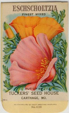Vintage Flower Seed Packet Tuckers Seed House Lithograph ESCHSCHOLTZIA (CALIFORNIA POPPY)(Carthage, Missouri). $6.00, via Etsy.