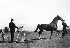 """An undated photo shows George Ford Morris, """"celebrated American painter of the horse,"""" at work in the field. A 1949 article discussed his collection of works, comprising 4,000 items, including proofs, photographs and many originals. """"It would be a lot of horses to have around if you had to feed them,"""" the artist said. Photo: The New York Times"""