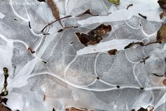 """Crystal Jigsaw Series (#1) / Abstract Ice Patterns / Winter, Nature / Fine Art Photography Print. The """"Crystal Jigsaw Series"""" stems from the discovery of a small puddle in a depression in our driveway that had frozen over, forming the most marvelous crystals... Looking like pieces of an abstract jigsaw puzzle, I was completely struck by just how unique & unusual the large crystal formations were. Elegant patterns provided by nature, there are 3 photographs in this series, which make a..."""