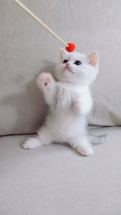 Funny Animal Images, Cute Animals Images, Cute Animal Memes, Cute Wild Animals, Funny Animal Videos, Cute Funny Animals, Baby Animals Super Cute, Cute Baby Cats, Cute Cat Gif