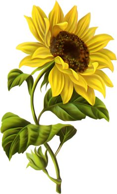 "Képtalálat a következőre: ""sunflower drawing"" Sunflower Drawing, Sunflower Art, Sunflower Paintings, Sunflower Design, Yellow Sunflower, Tole Painting, Fabric Painting, Art Floral, Botanical Illustration"