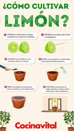 Cómo cultivar una planta de limones o limonero en maceta - Alles über den Garten Eco Garden, Home Vegetable Garden, Fruit Garden, Edible Garden, Garden Plants, Growing Vegetables, Growing Plants, Gardening Vegetables, Lemon Plant
